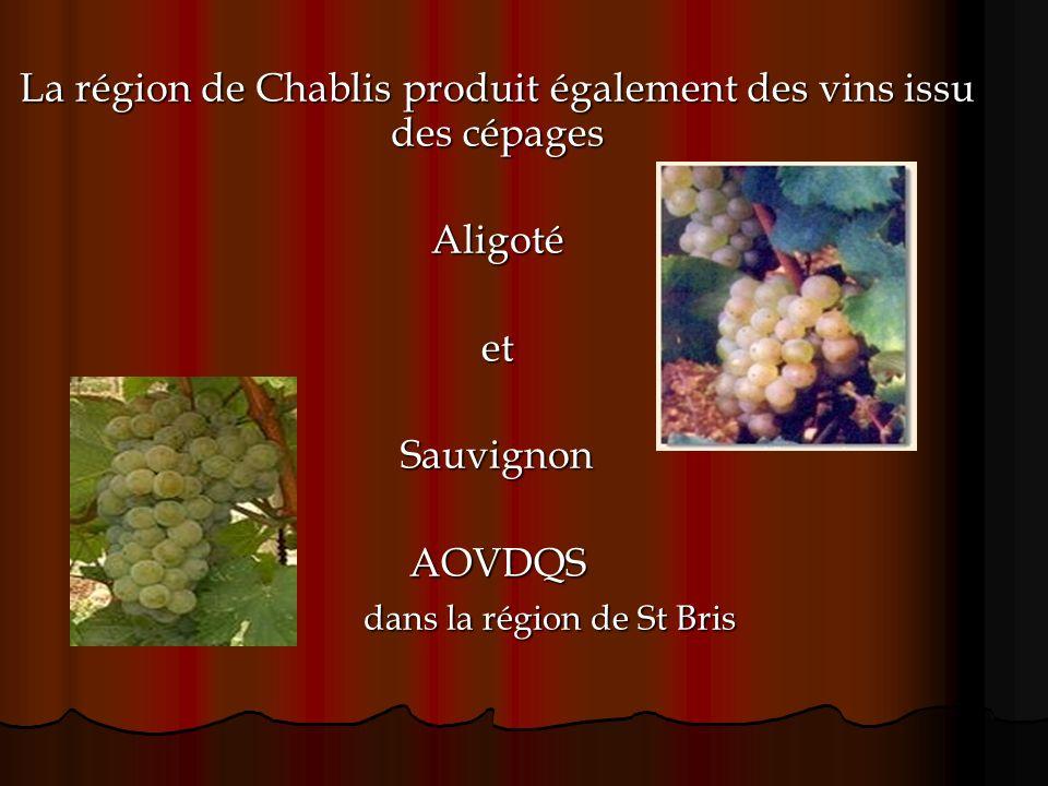 La région de Chablis produit également des vins issu des cépages AligotéetSauvignonAOVDQS dans la région de St Bris