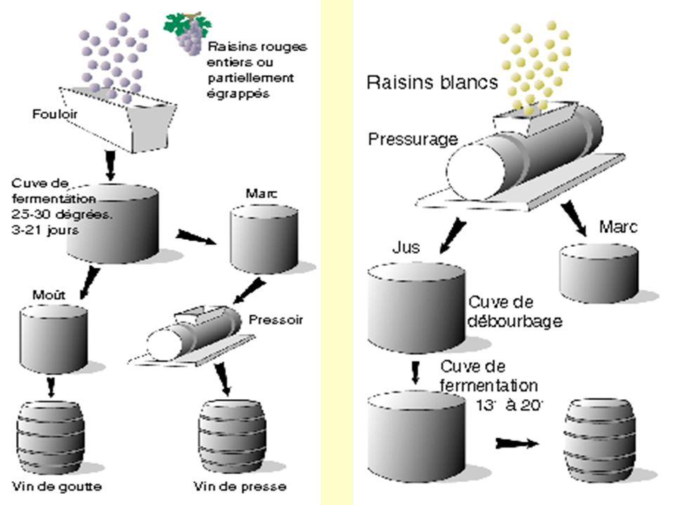 Le pressurage et la fermentation malolactique Le moût > vin de goutte.
