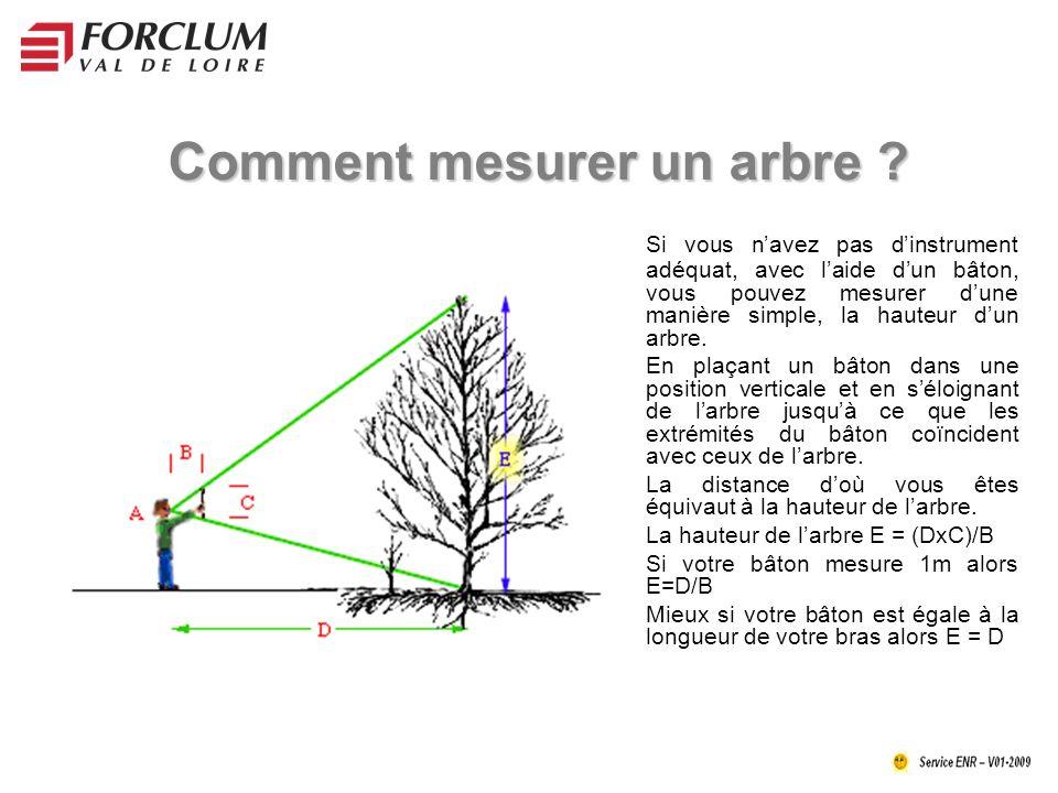 Comment mesurer un arbre .