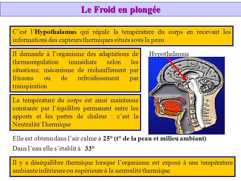 Hypothalamus Il y a déséquilibre thermique lorsque lorganisme est exposé à une température ambiante inférieure ou supérieure à la neutralité thermique