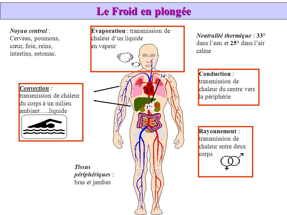 Noyau central : Cerveau, poumons, cœur, foie, reins, intestins, estomac. Évaporation : transmission de chaleur dun liquide en vapeur Neutralité thermi
