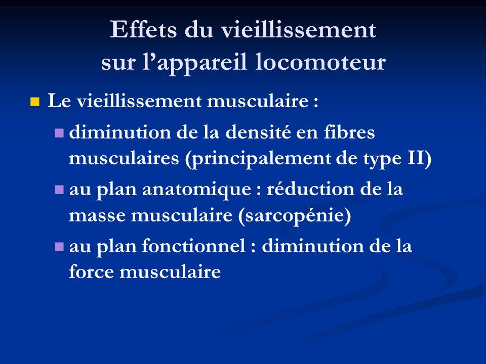Effets du vieillissement sur lappareil locomoteur Le vieillissement musculaire : diminution de la densité en fibres musculaires (principalement de typ