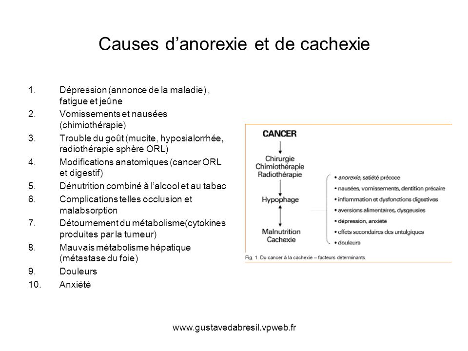 www.gustavedabresil.vpweb.fr Causes danorexie et de cachexie 1.Dépression (annonce de la maladie), fatigue et jeûne 2.Vomissements et nausées (chimiot