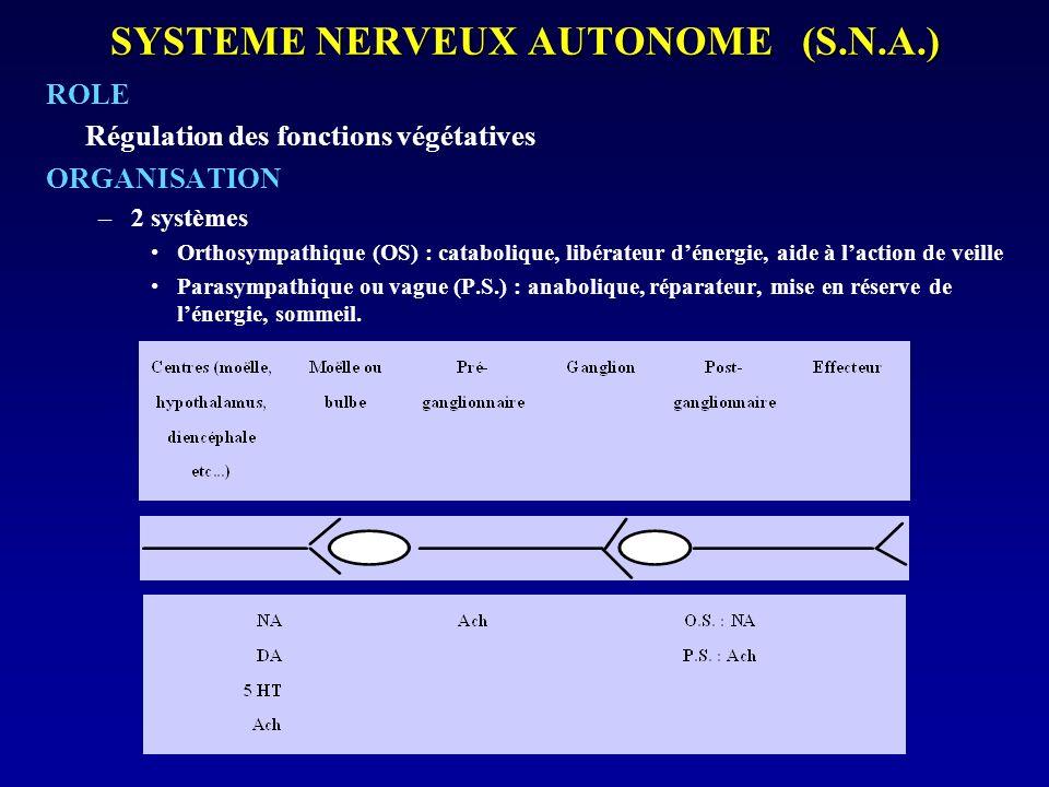 SYSTEME NERVEUX AUTONOME (S.N.A.) ROLE Régulation des fonctions végétatives ORGANISATION –2 systèmes Orthosympathique (OS) : catabolique, libérateur d
