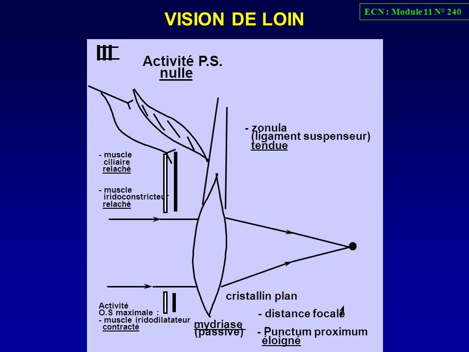 VISION DE LOIN III mydriase - distance focale - Punctum proximum éloigné - zonula (ligament suspenseur) tendue - muscle ciliaire relaché - muscle irid