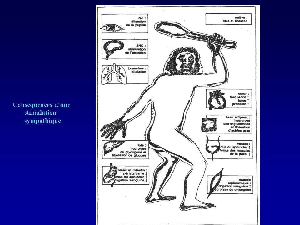 Conséquences d une activation parasympathique