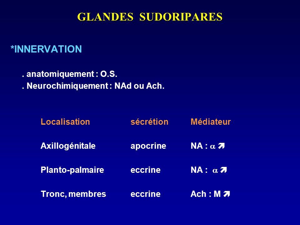 GLANDES SUDORIPARES *INNERVATION. anatomiquement : O.S.. Neurochimiquement : NAd ou Ach. Localisation sécrétion Médiateur Axillogénitale apocrine NA :