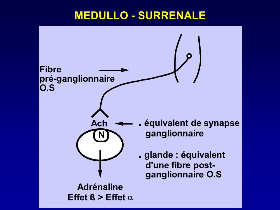 MEDULLO - SURRENALE Ach N. équivalent de synapse ganglionnaire. glande : équivalent d'une fibre post- ganglionnaire O.S Adrénaline Effet ß > Effet Fib