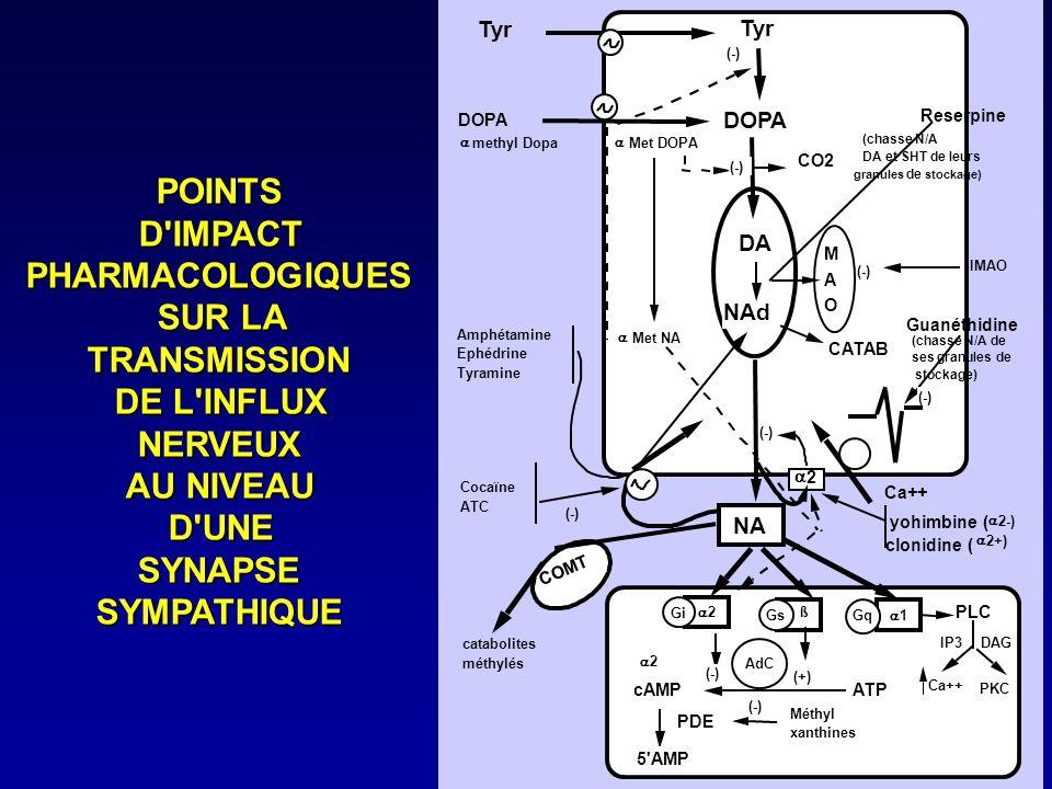 POINTSD'IMPACTPHARMACOLOGIQUES SUR LA TRANSMISSION DE L'INFLUX NERVEUX AU NIVEAU D'UNESYNAPSESYMPATHIQUE