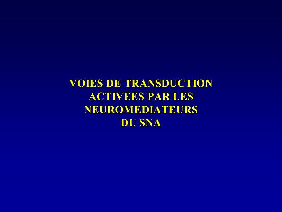 DHE : 1 + agoniste partiel Leffet vasculaire de la DHE, ( agoniste partiel) dépend de létat de contraction du vaisseau - peu contracté (NA basse) : DHE = VC - très contracté (NA haute) : DHE = VD Intérêt thérapeutique : prévient les crises migraineuses (égalise les variations de létat de contraction des artères crâniennes).
