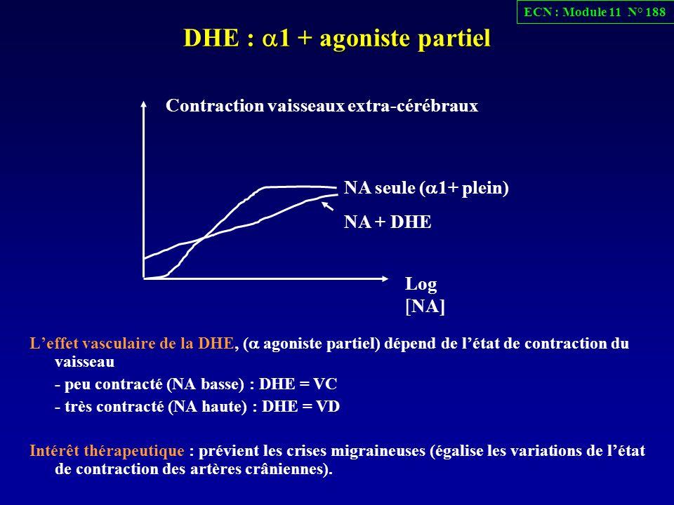 DHE : 1 + agoniste partiel Leffet vasculaire de la DHE, ( agoniste partiel) dépend de létat de contraction du vaisseau - peu contracté (NA basse) : DH