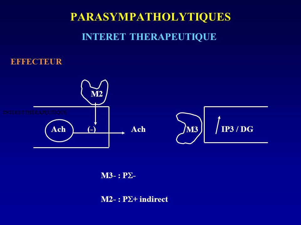 PARASYMPATHOLYTIQUES INTERET THERAPEUTIQUE EFFECTEUR Ach (-) Ach IP3 / DG M3- : P - M2- : P + indirect INTERET THERAPEUTIQUE M2 M3