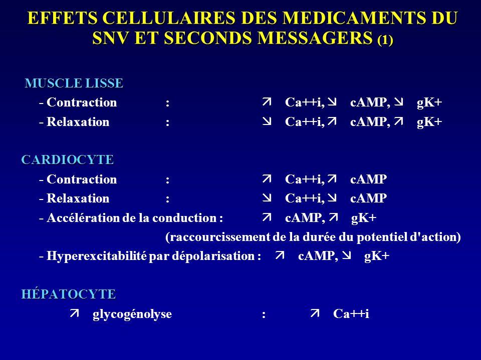 EFFETS CELLULAIRES DES MEDICAMENTS DU SNV ET SECONDS MESSAGERS (2) ADIPOCYTE lipolyse : cAMP CELLULES ÉPITHÉLIALES SÉCRÉTRICES sécrétion : Ca++i NEURONES - Soma : hyperpolarisation cAMP, gK+ - Terminaisons : neurosécrétion : Ca++i, cAMP FIBROBLASTES - Différentiation : cAMP - Prolifération : Ca++i, DAG THROMBOCYTES - Agrégation : Ca++i, cAMP