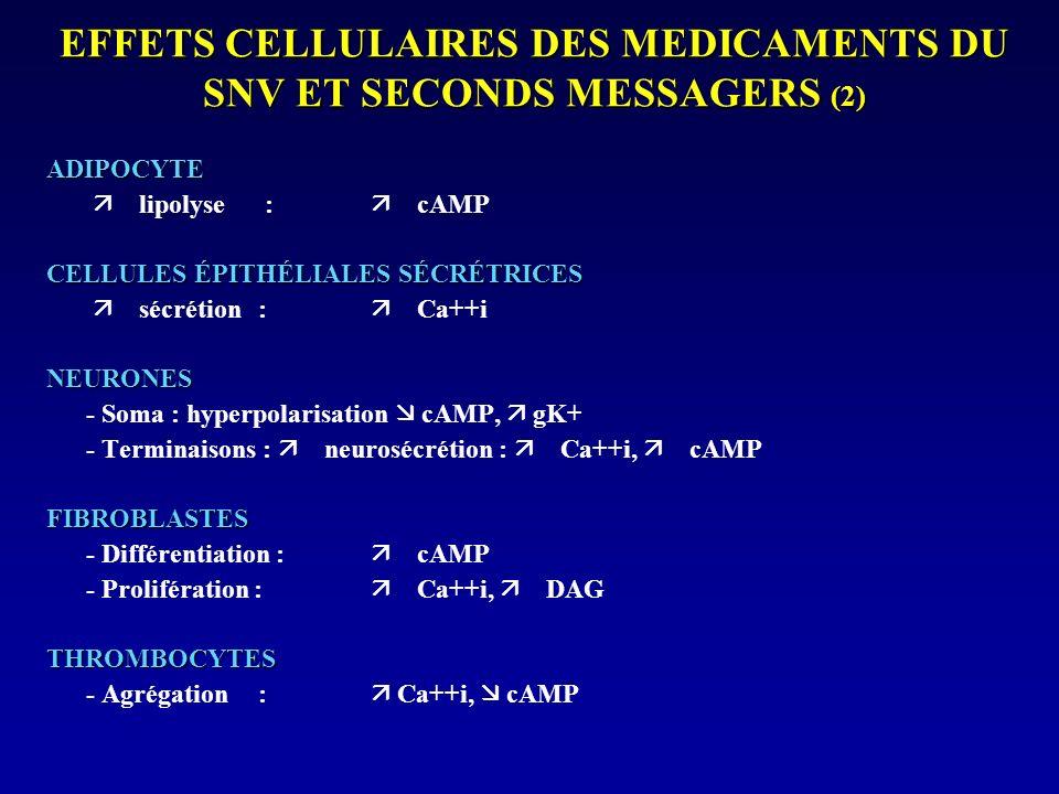 EFFETS INDESIRABLES DES P - SNA : – COEUR : Tachycardie – TUBE DIGESTIF : Constipation, RGO – VESSIE : Rétention urinaire : CI = adénome prostatique – OEIL : Mydriase : CI = GAF – Cycloplégie SNC : –Désorientation temporo-spatiale –Amnésie –Hyperexcitabilité neuromusculaire –Hyperthermie –Syndrome pseudo-cérébelleux –Hallucinations