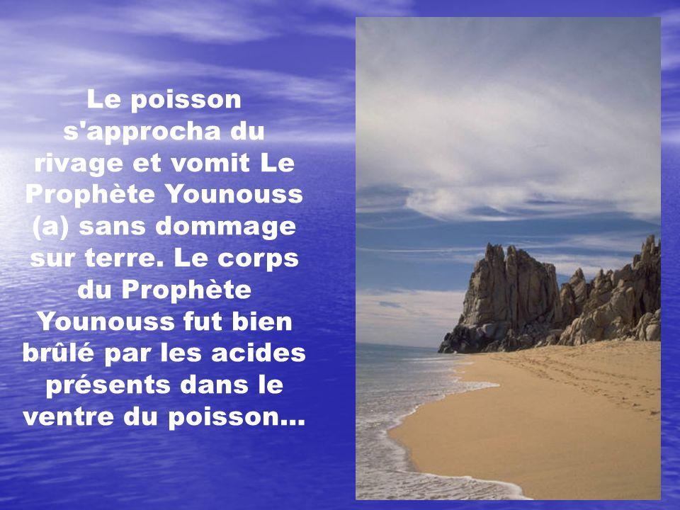 Le poisson s'approcha du rivage et vomit Le Prophète Younouss (a) sans dommage sur terre. Le corps du Prophète Younouss fut bien brûlé par les acides