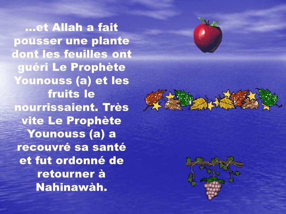 …et Allah a fait pousser une plante dont les feuilles ont guéri Le Prophète Younouss (a) et les fruits le nourrissaient. Très vite Le Prophète Younous