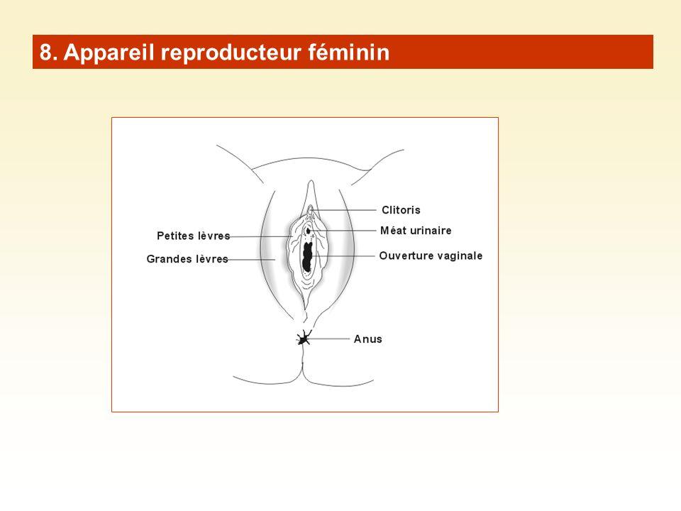 8. Appareil reproducteur féminin