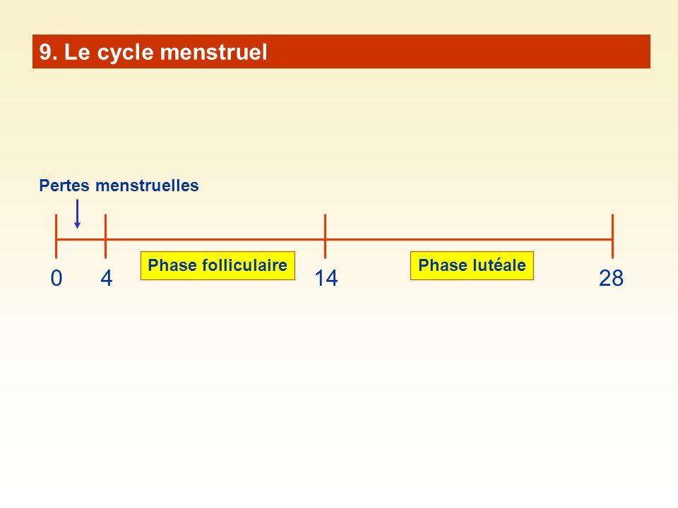 9. Le cycle menstruel 041428 Phase folliculairePhase lutéale Pertes menstruelles