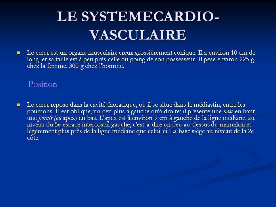 LE SYSTEMECARDIO- VASCULAIRE Le cœur est un organe musculaire creux grossièrement conique. Il a environ 10 cm de long, et sa taille est à peu près cel