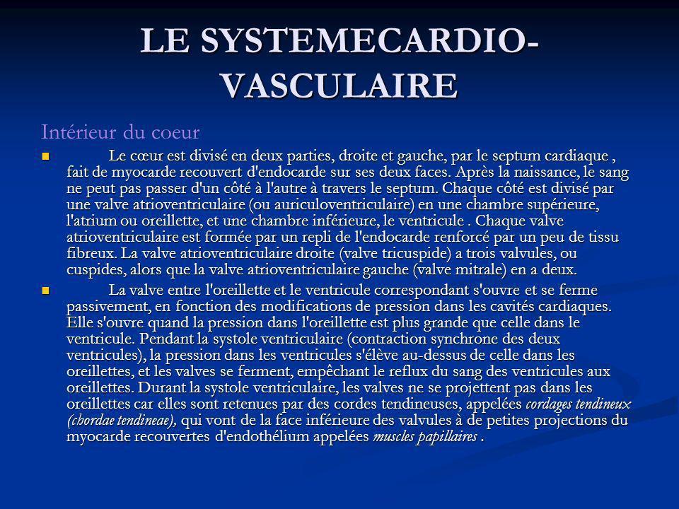 Intérieur du coeur Le cœur est divisé en deux parties, droite et gauche, par le septum cardiaque, fait de myocarde recouvert d'endocarde sur ses deux