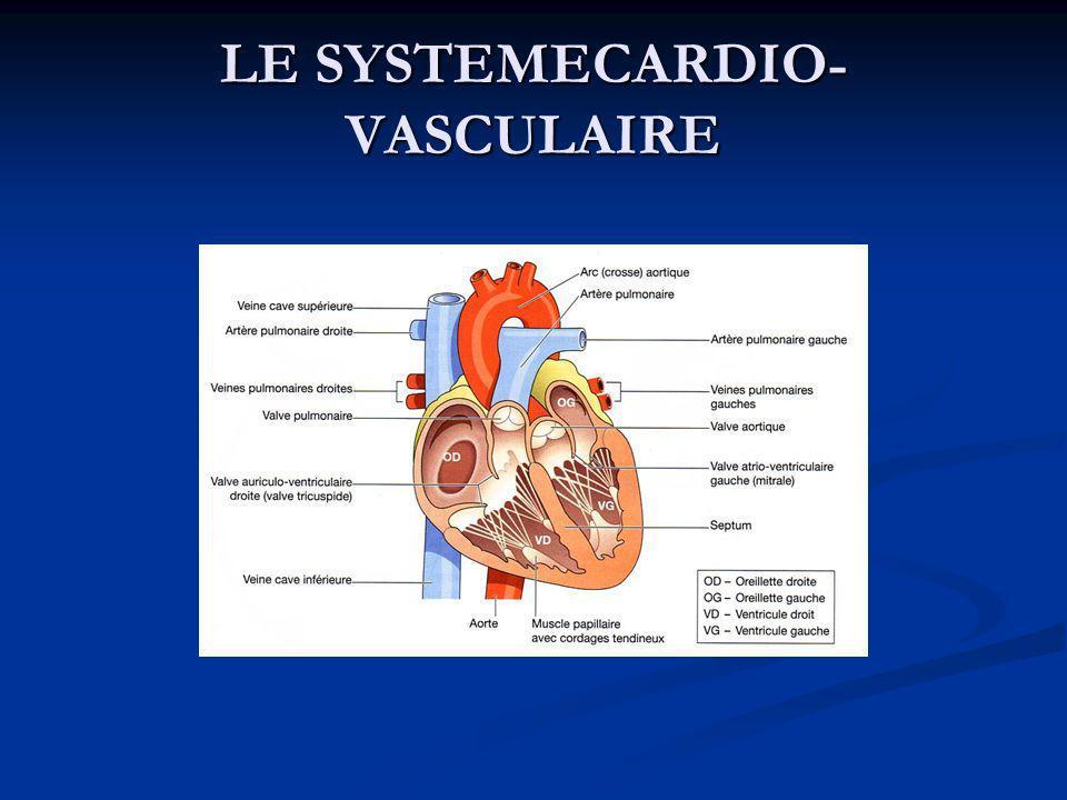 Flux du sang dans le cœur Les deux plus grosses veines du corps, les veines caves inférieure et supérieure, vident leur sang dans l oreillette droite.