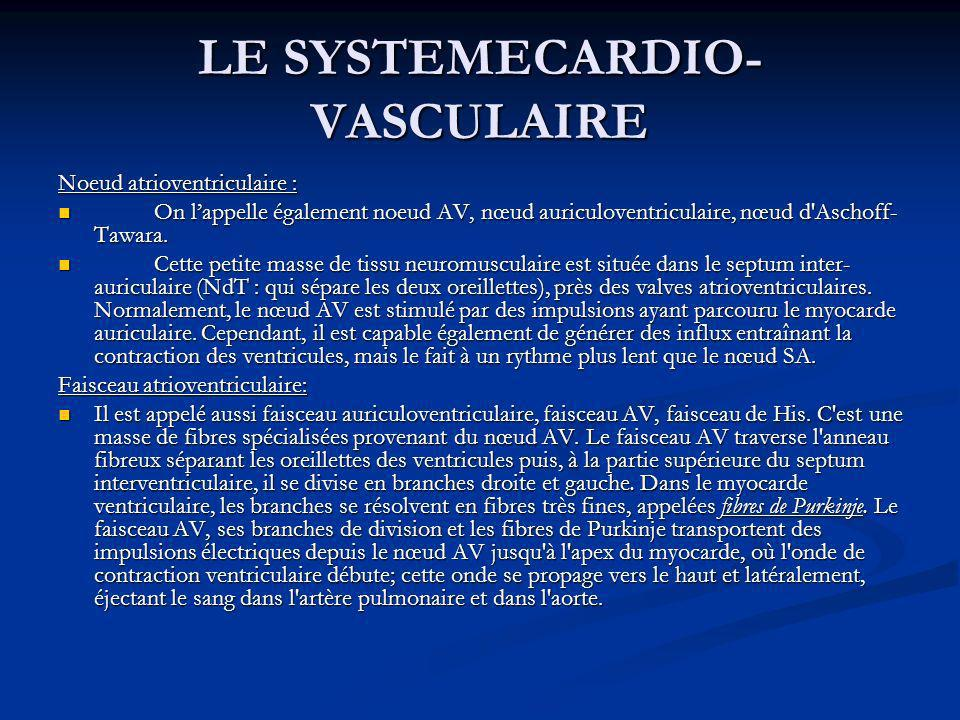 LE SYSTEMECARDIO- VASCULAIRE Noeud atrioventriculaire : On lappelle également noeud AV, nœud auriculoventriculaire, nœud d'Aschoff- Tawara. On lappell