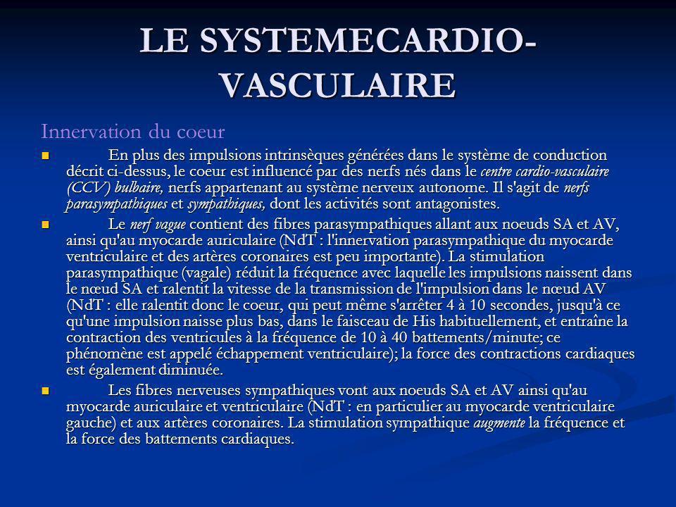 Innervation du coeur En plus des impulsions intrinsèques générées dans le système de conduction décrit ci-dessus, le coeur est influencé par des nerfs