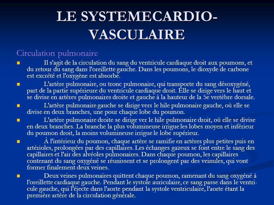 LE SYSTEMECARDIO- VASCULAIRE Circulation pulmonaire Il s'agit de la circulation du sang du ventricule cardiaque droit aux poumons, et du retour du san