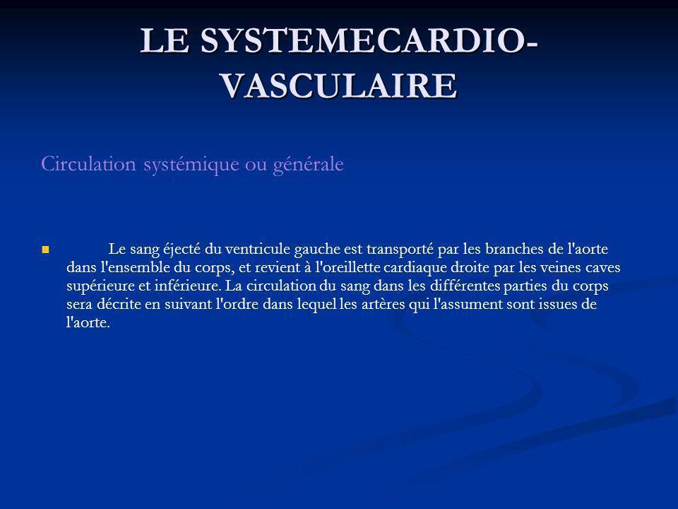 LE SYSTEMECARDIO- VASCULAIRE Circulation systémique ou générale Le sang éjecté du ventricule gauche est transporté par les branches de l'aorte dans l'