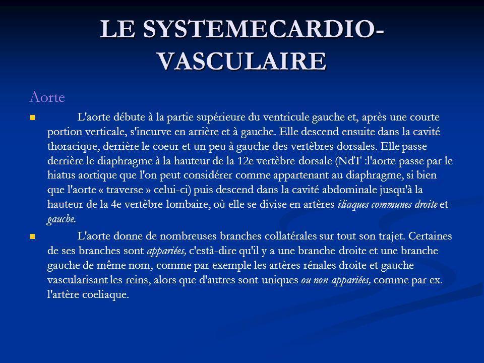 LE SYSTEMECARDIO- VASCULAIRE Aorte L'aorte débute à la partie supérieure du ventricule gauche et, après une courte portion verticale, s'incurve en arr