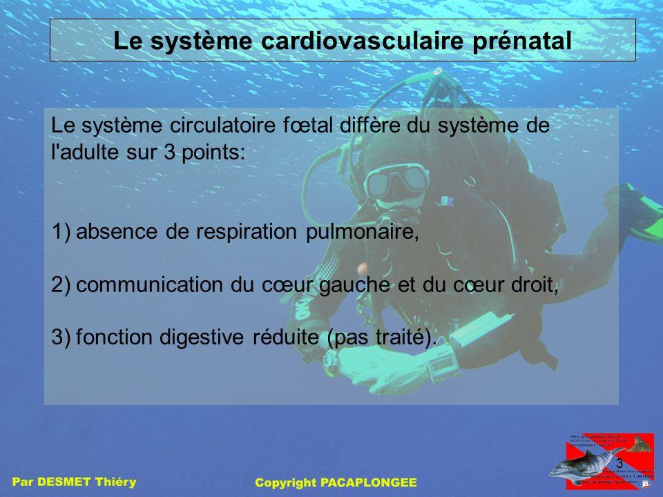 2 Introduction: Pour comprendre sans difficulté ce quest un FOP, il nous faut nous intéresser à notre système cardiovasculaire prénatal (avant la nais