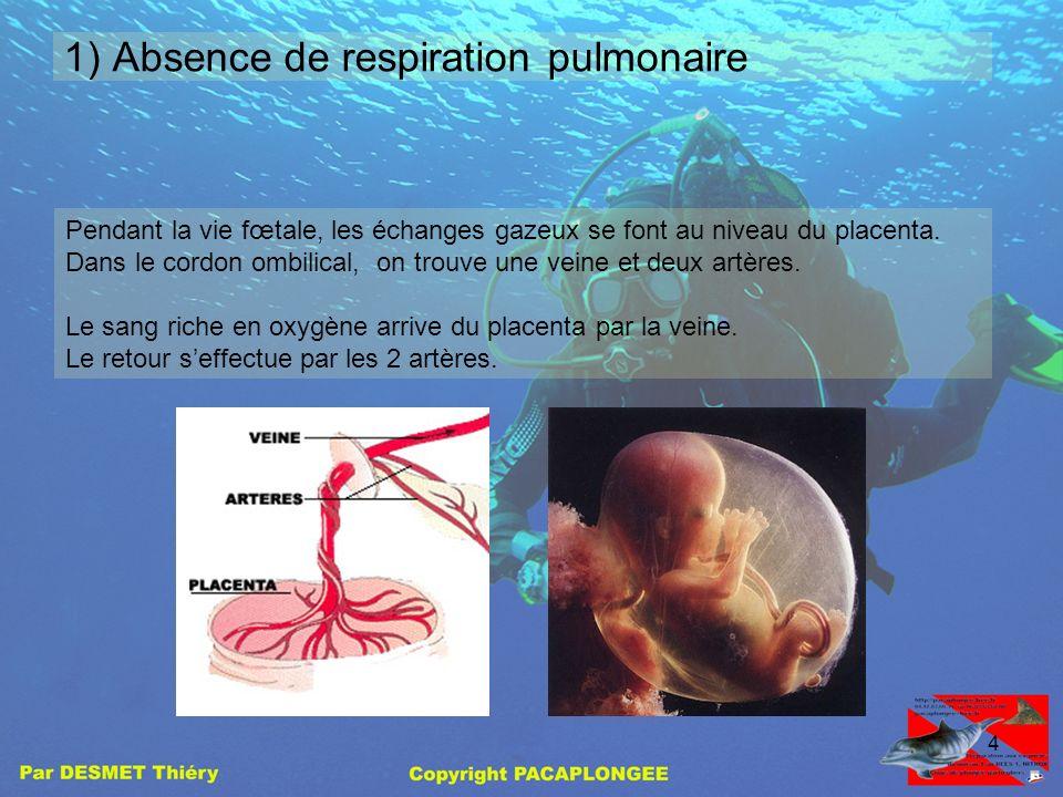 3 Le système cardiovasculaire prénatal Le système circulatoire fœtal diffère du système de l'adulte sur 3 points: 1)absence de respiration pulmonaire,