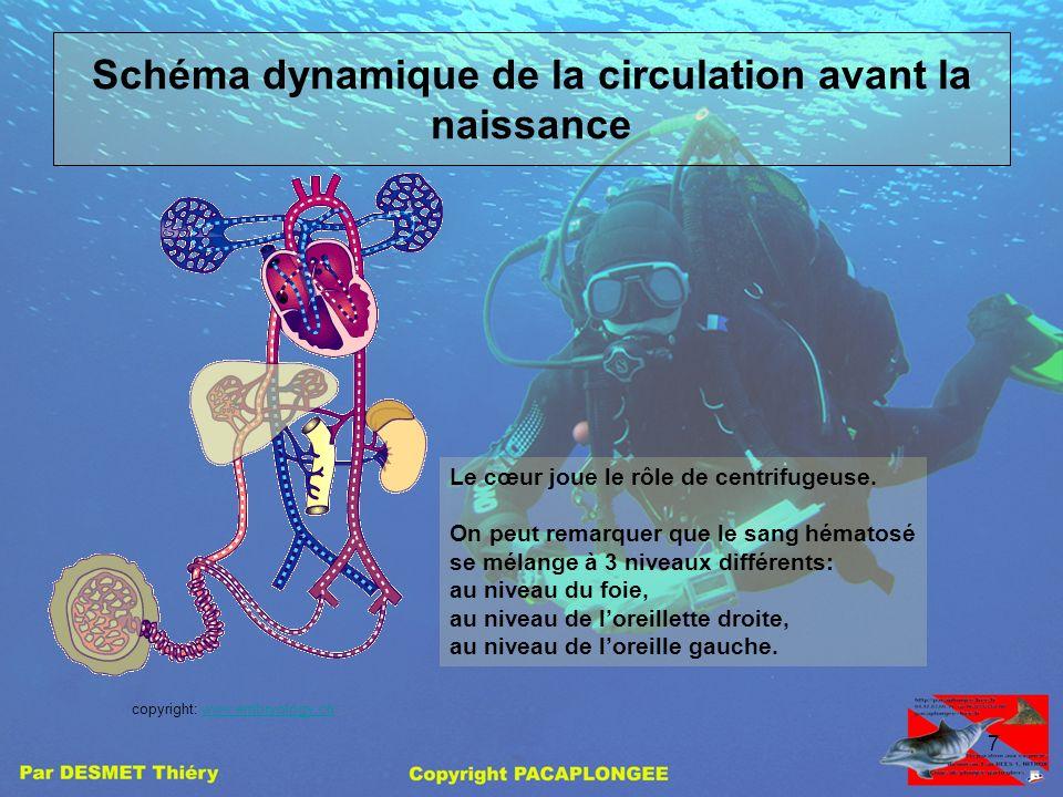 6 Visualisation dun FOP La paroi inter auriculaire (septum) est ouverte avant la naissance permettant au sang de circuler directement de loreillette d