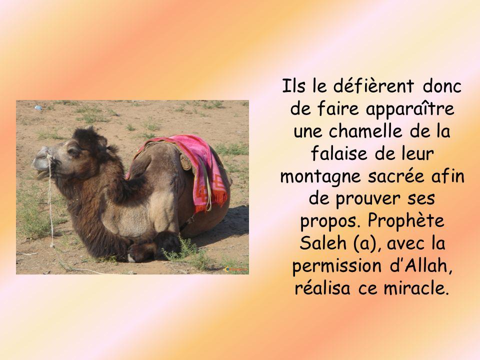 Ils le défièrent donc de faire apparaître une chamelle de la falaise de leur montagne sacrée afin de prouver ses propos. Prophète Saleh (a), avec la p