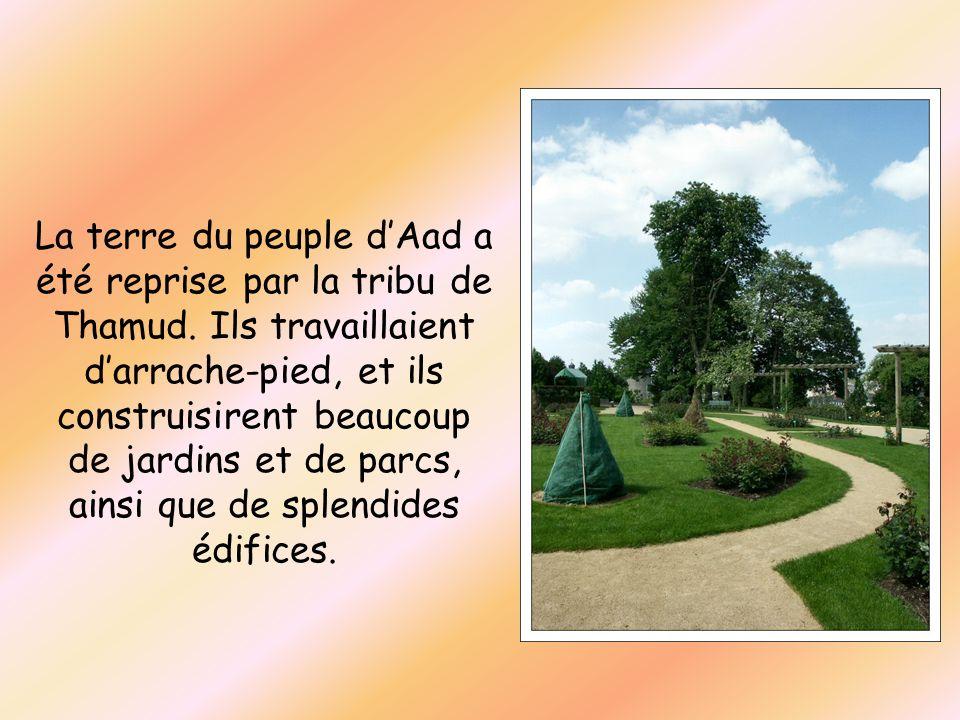 La terre du peuple dAad a été reprise par la tribu de Thamud. Ils travaillaient darrache-pied, et ils construisirent beaucoup de jardins et de parcs,