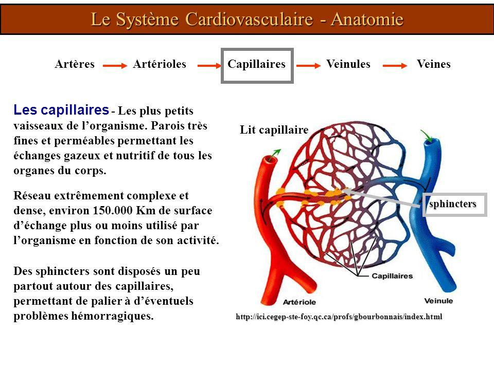 ArtèresArtériolesVeinulesVeinesCapillaires Les capillaires - Les plus petits vaisseaux de lorganisme. Parois très fines et perméables permettant les é