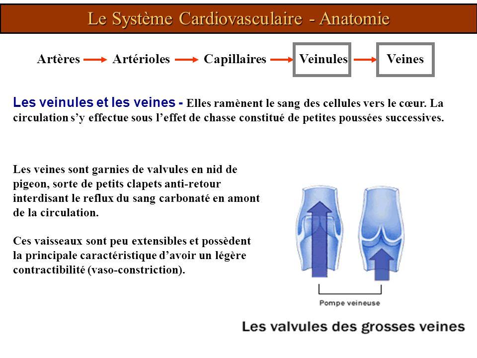 Les veinules et les veines - Elles ramènent le sang des cellules vers le cœur. La circulation sy effectue sous leffet de chasse constitué de petites p