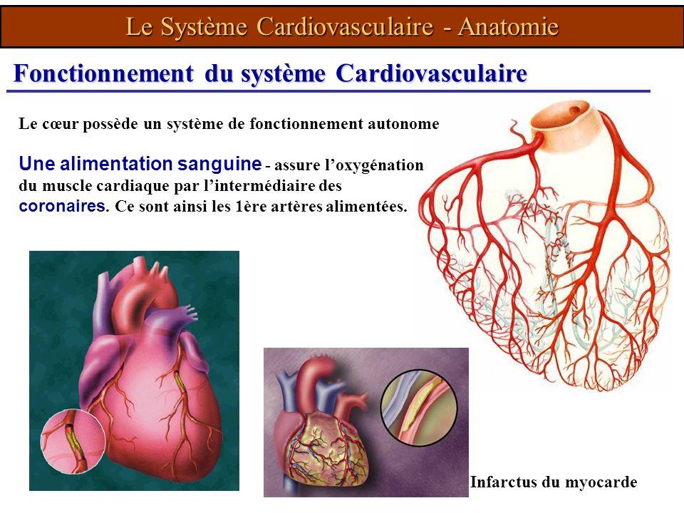 Le cœur possède un système de fonctionnement autonome Infarctus du myocarde Fonctionnement du système Cardiovasculaire Une alimentation sanguine - ass