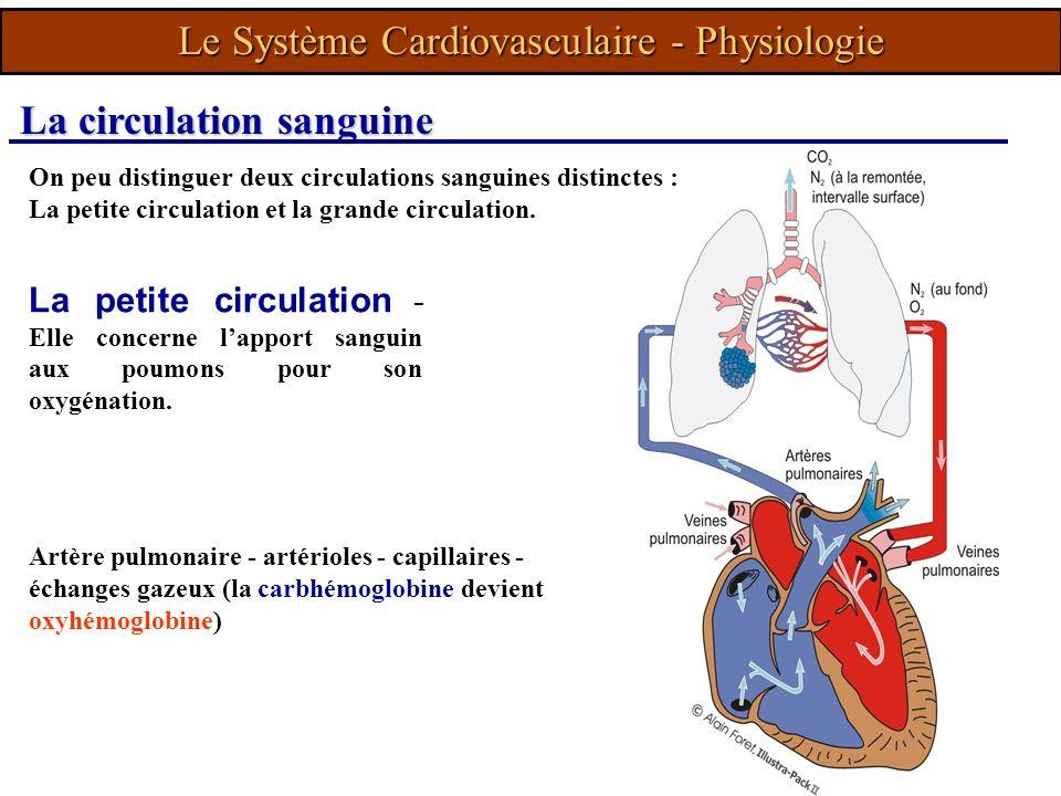 On peu distinguer deux circulations sanguines distinctes : La petite circulation et la grande circulation. La petite circulation - Elle concerne lappo