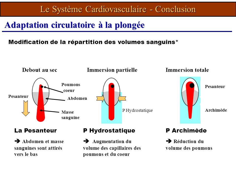 Modification de la répartition des volumes sanguins* La Pesanteur Abdomen et masse sanguines sont attirés vers le bas Poumons Masse sanguine coeur Abd