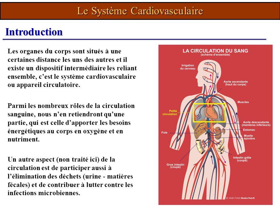 Parmi les nombreux rôles de la circulation sanguine, nous nen retiendront quune partie, qui est celle dapporter les besoins énergétiques au corps en o