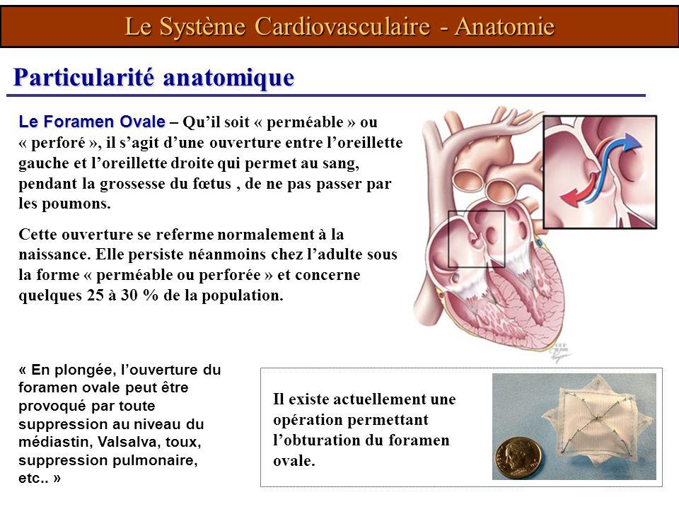 Le Système Cardiovasculaire - Anatomie « En plongée, louverture du foramen ovale peut être provoqué par toute suppression au niveau du médiastin, Vals