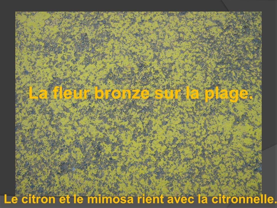 La fleur bronze sur la plage. Le citron et le mimosa rient avec la citronnelle.