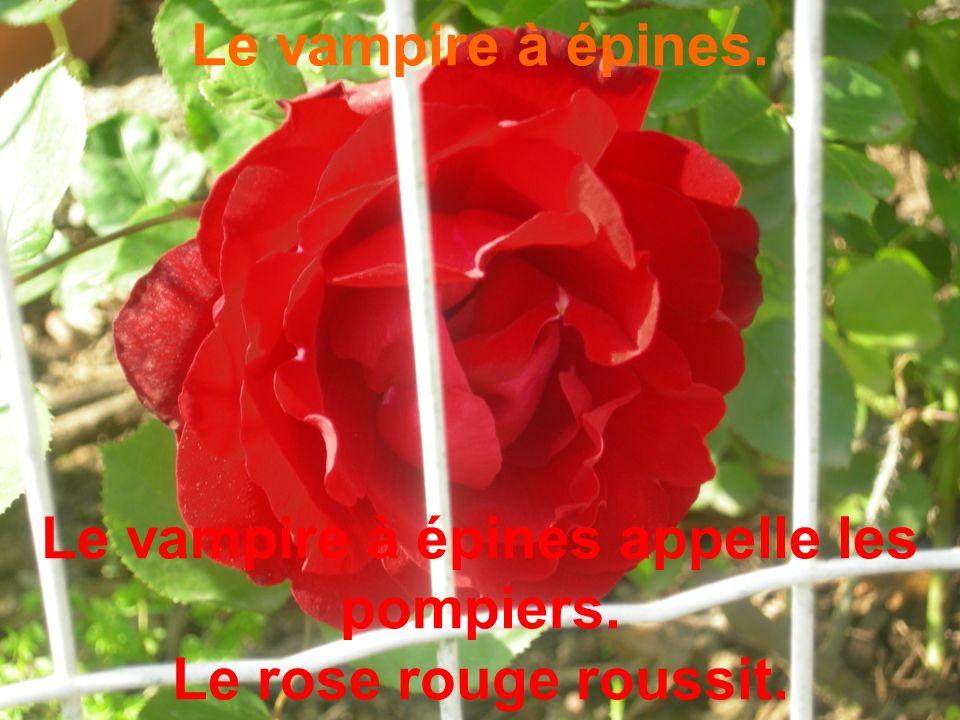 Le vampire à épines. Le vampire à épines appelle les pompiers. Le rose rouge roussit.