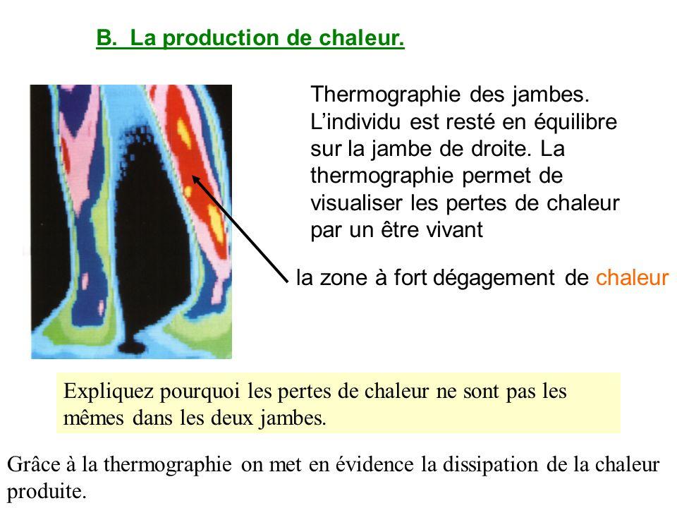 B.La production de chaleur. Thermographie des jambes. Lindividu est resté en équilibre sur la jambe de droite. La thermographie permet de visualiser l