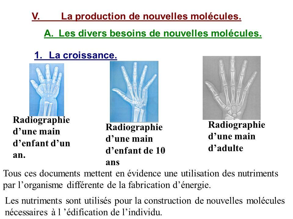 V.La production de nouvelles molécules. A.Les divers besoins de nouvelles molécules. 1.La croissance. Radiographie dune main denfant dun an. Radiograp