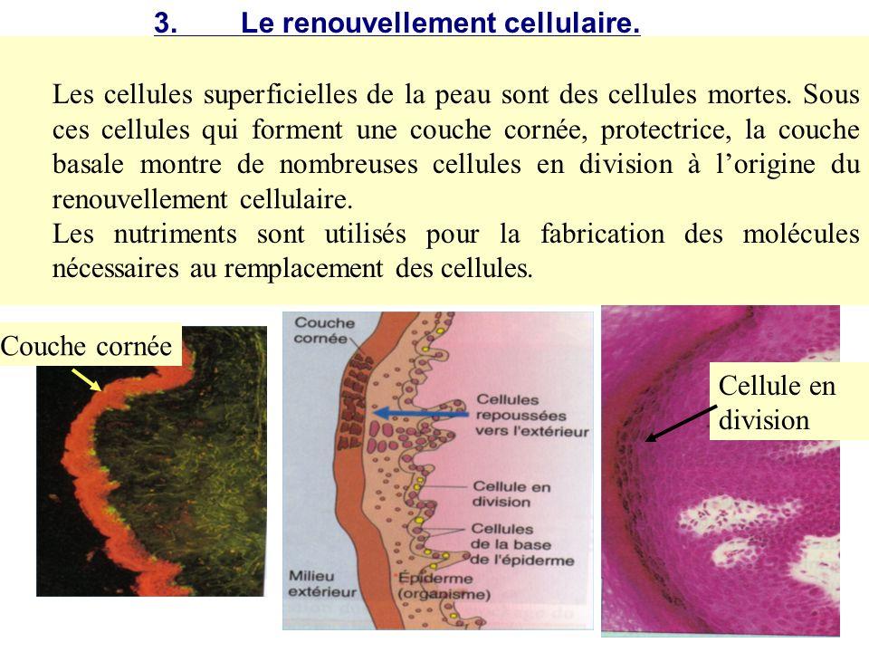 Des cellules mortes se détachent continuellement de la surface de la peau. Pourtant, la peau conserve toujours son épaisseur à la surface du corps. Co