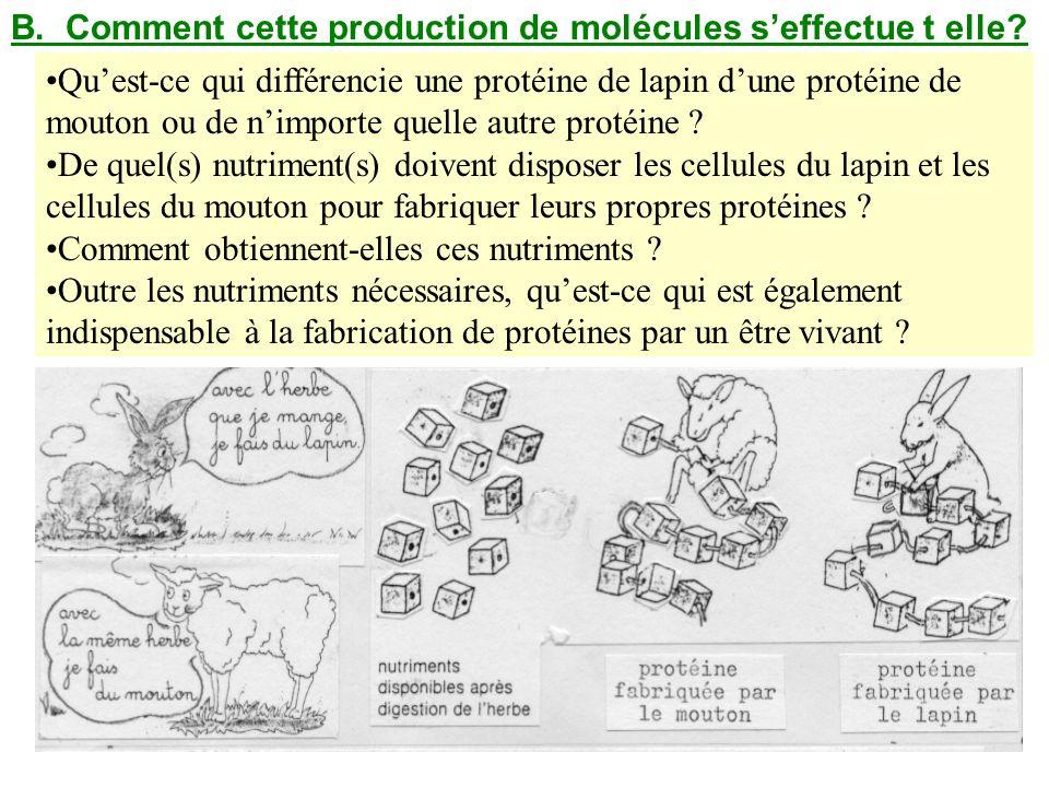 B. Comment cette production de molécules seffectue t elle? Lecture toute la page 134. Répondre aux questions du document distribué. Quest-ce qui diffé