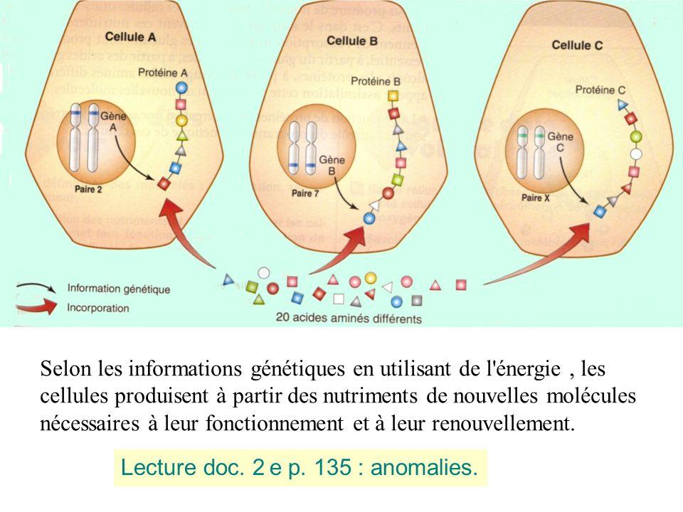 Selon les informations génétiques en utilisant de l'énergie, les cellules produisent à partir des nutriments de nouvelles molécules nécessaires à leur