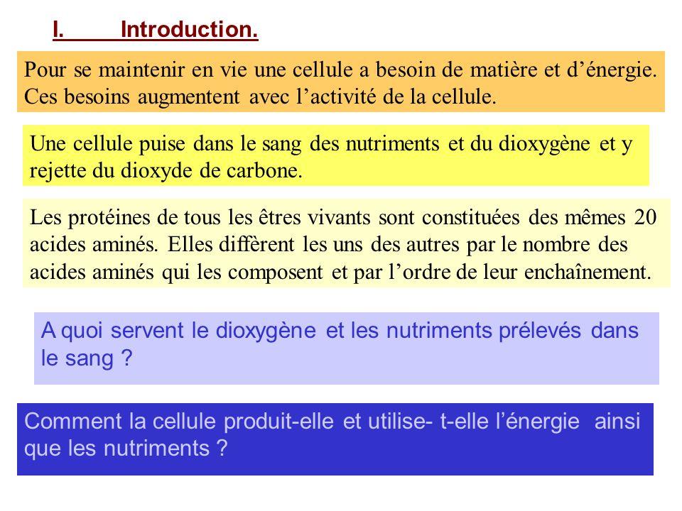 I.Introduction. A quoi servent le dioxygène et les nutriments prélevés dans le sang ? Comment la cellule produit-elle et utilise- t-elle lénergie ains